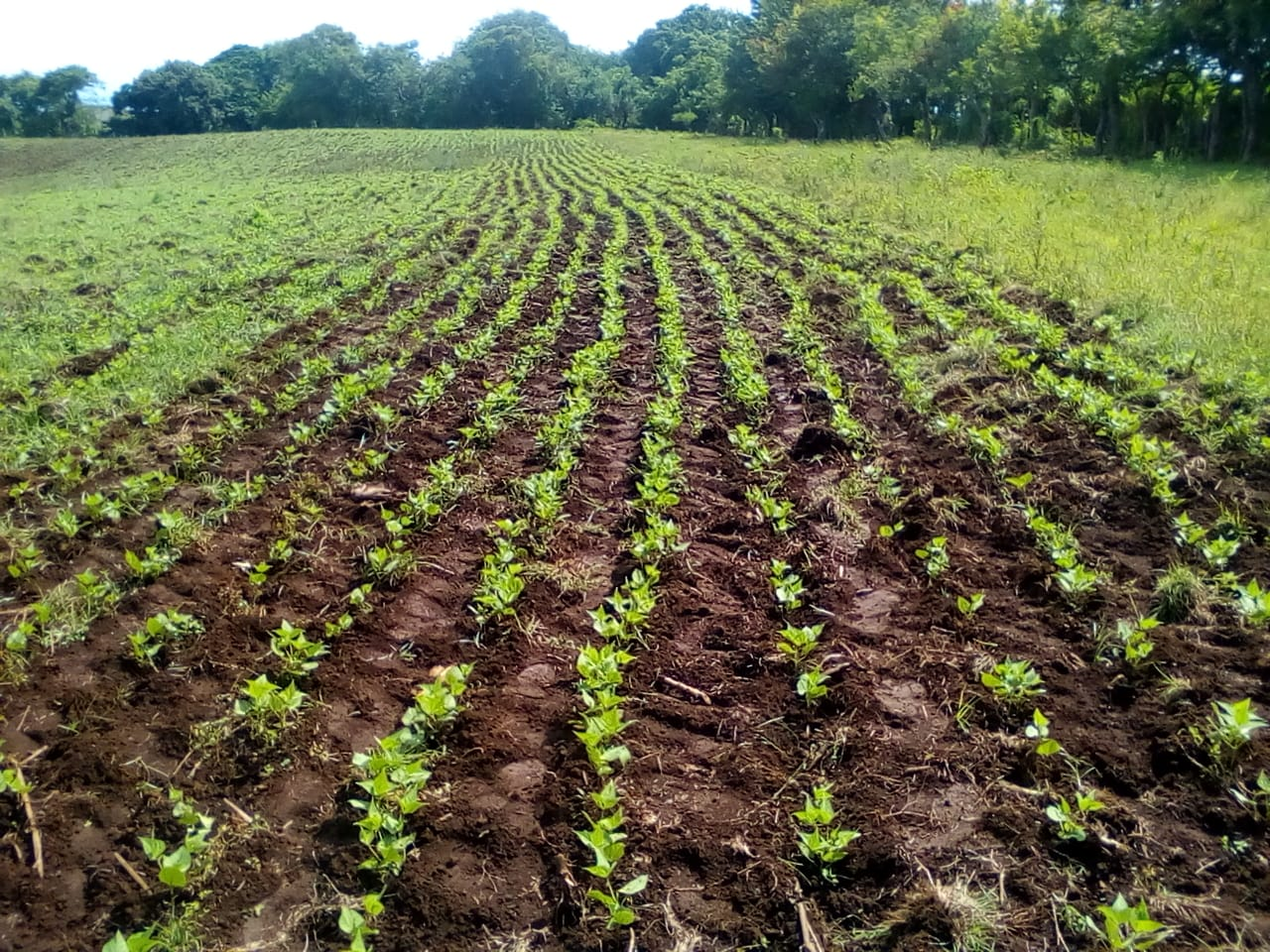 Land for agriculture or housing development