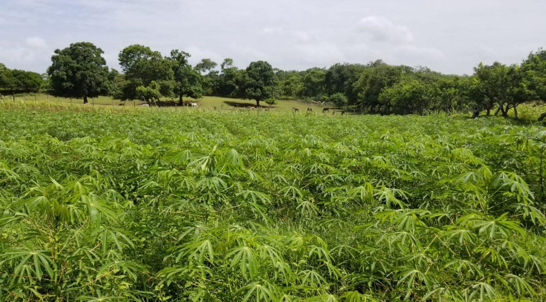 Terreno-Masaya-Nicaragua-Bienes-Raices 3