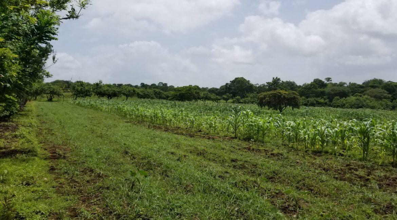 Terreno-Masaya-Nicaragua-Bienes-Raices 4