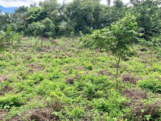 tierra-agricola-en-venta-granada-nicaragua (6)