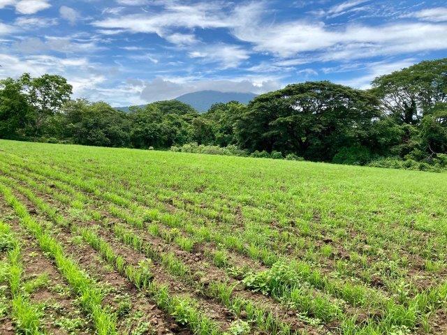 tierra-agricola-en-venta-monteverde-nicaragua (3)
