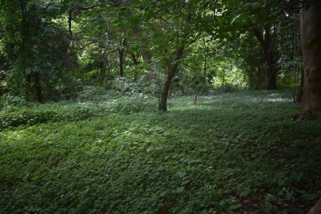 Vista-Eco-offgrid-Nicaragua (22)