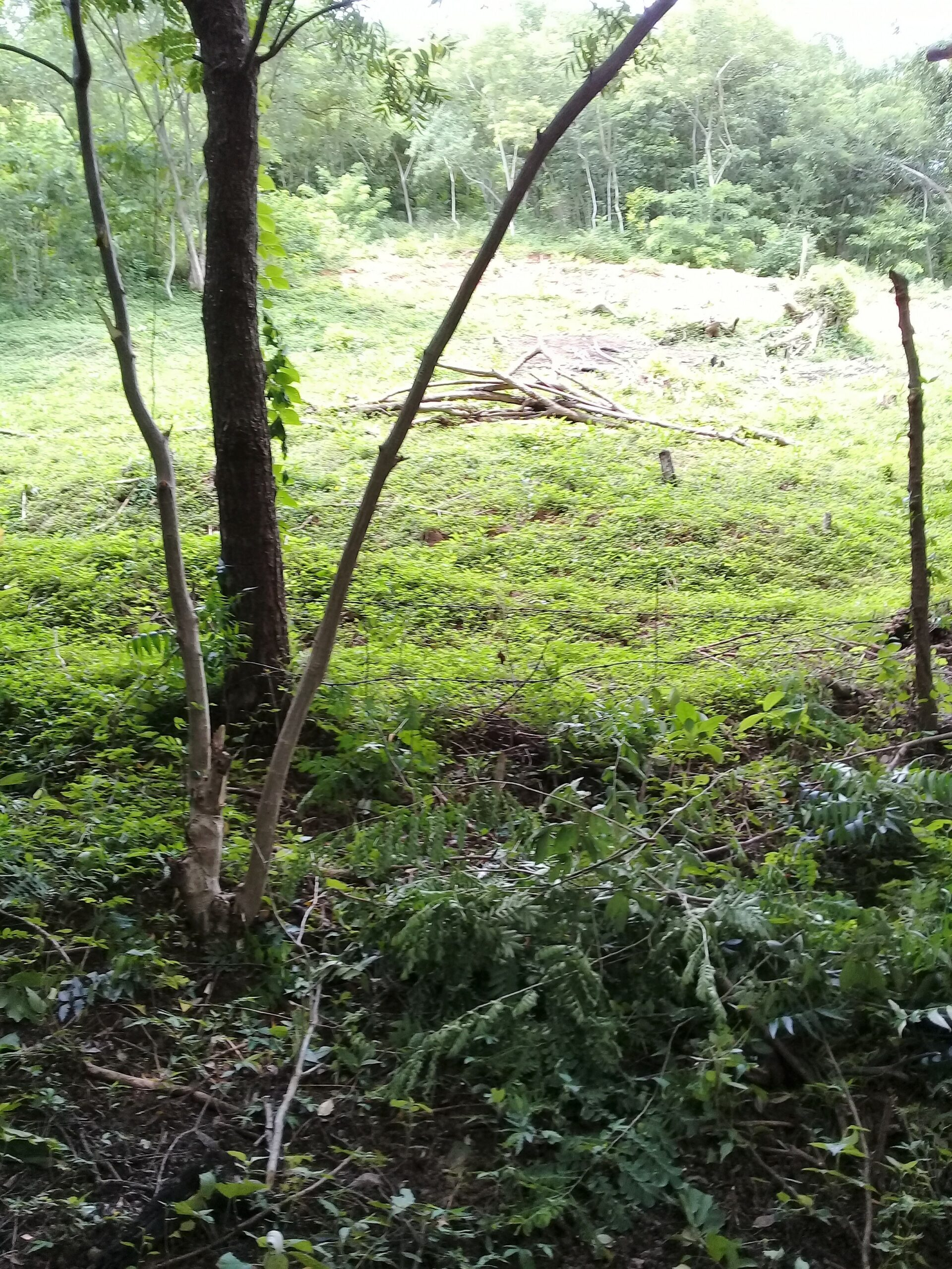 Ostional Land for sale