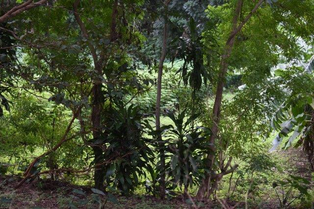 Mombacho-land-for-sale (1)