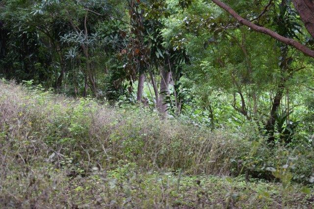 Mombacho-land-for-sale (16)