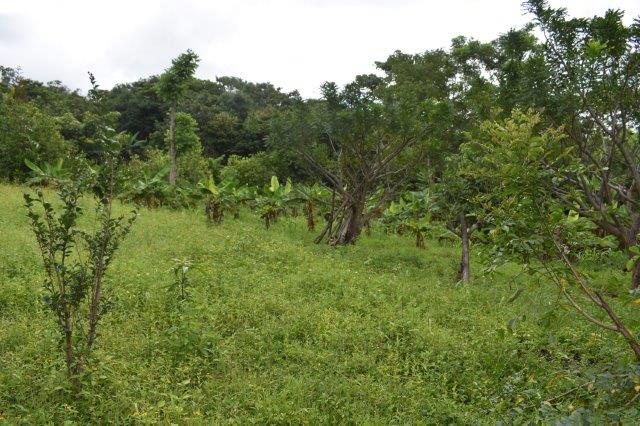 Mombacho-land-for-sale (9)