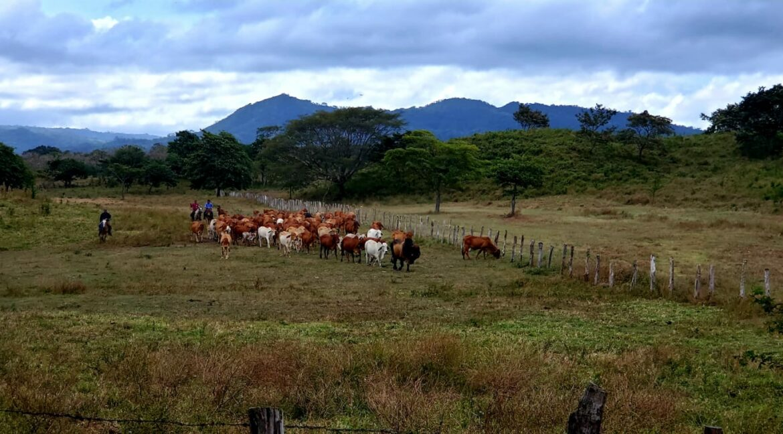 Nicaragua-real-estate-farm